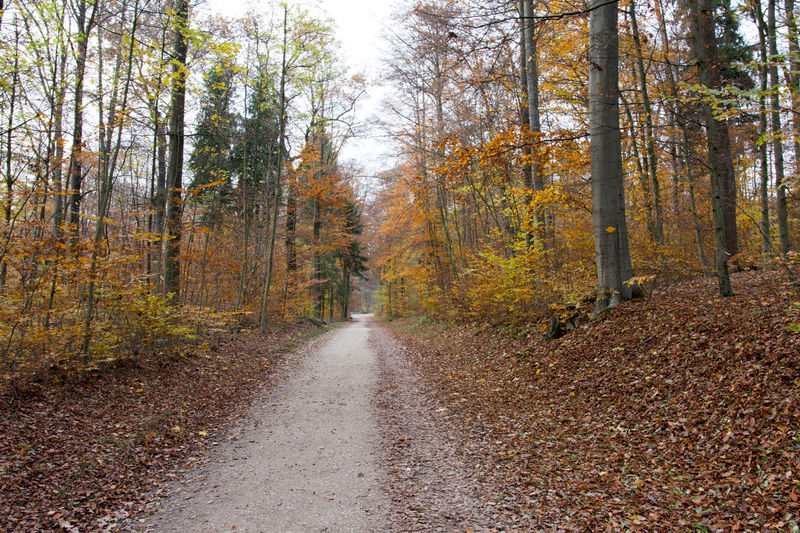 Forest Autumn Beauty In Nature Day Forest Growth Nature No People Outdoors Switzerland The Way Forward Tranquil Scene Tree