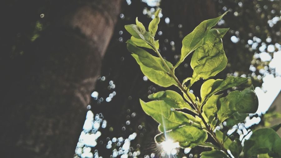 Nature Leaf 🍂 Sun Natural Bookeh Sky Beauty In Nature Green Green Green!  Greenery