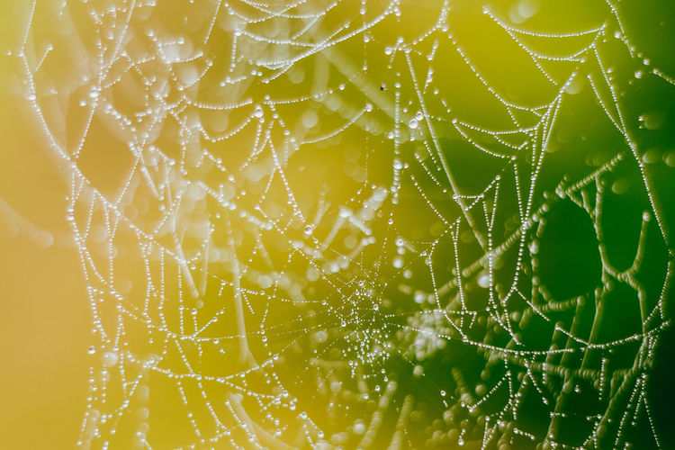 Spider Web Autumn Dew Morning Raindrops Animal Themes Backgrounds Beauty In Nature Close-up Cobweb Complexity Day Dew Drops Dew On Cobweb Focus On Foreground Fog Fragility Freshness Intricacy Nature No People Outdoors Spider Spider Web Web The Week On EyeEm