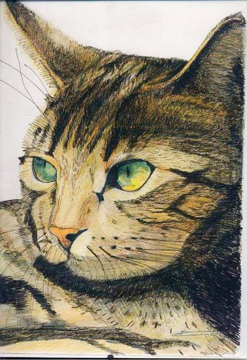 Domestic Cat Animal Themes Personally Draw Crayon Dessin Couleur Dessin Perso