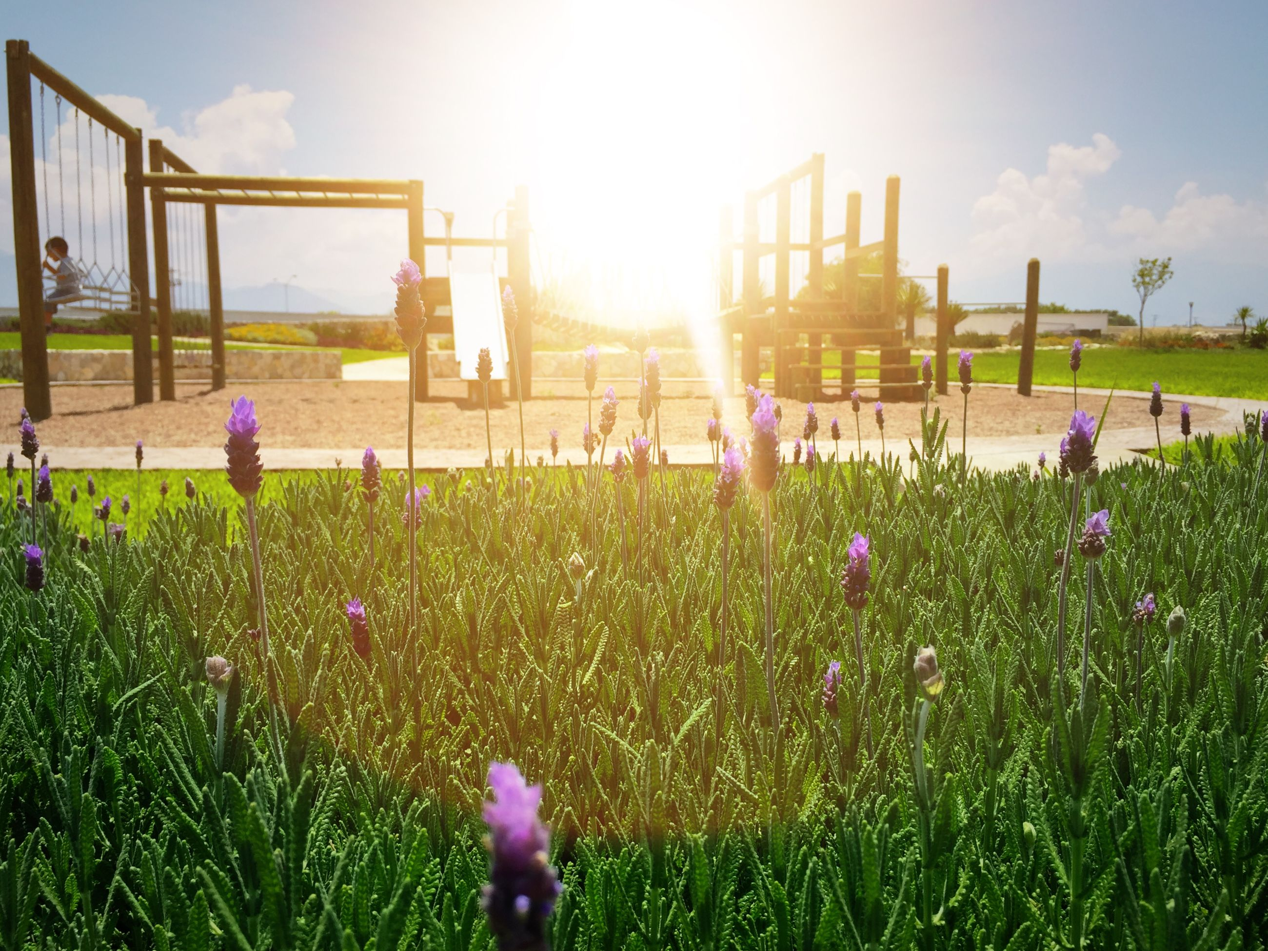 grass, field, flower, sunlight, growth, sky, sun, grassy, plant, sunbeam, building exterior, built structure, green color, freshness, lens flare, nature, lawn, architecture, day, beauty in nature