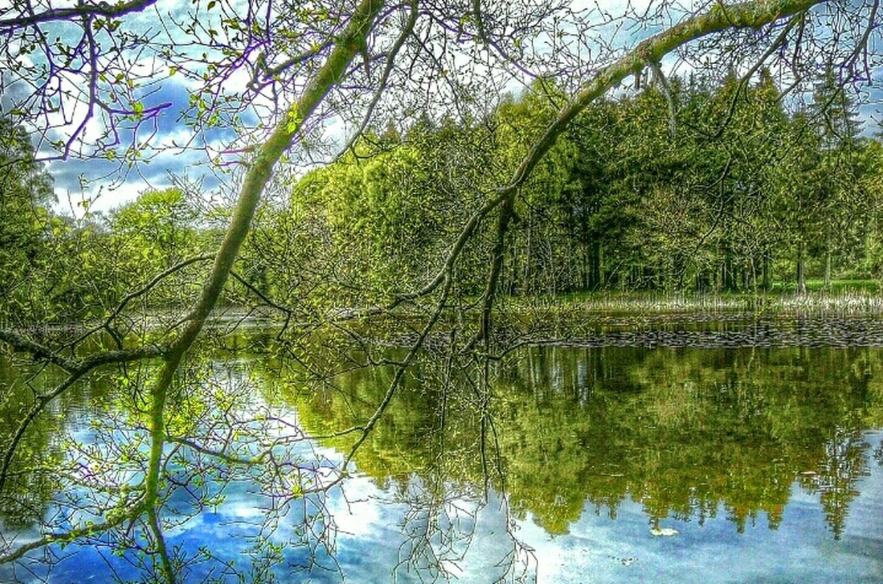tree, reflection, nature, beauty in nature, branch, water, lake, growth, green color, day, outdoors, forest, tranquil scene, no people, tranquility, scenics, sky
