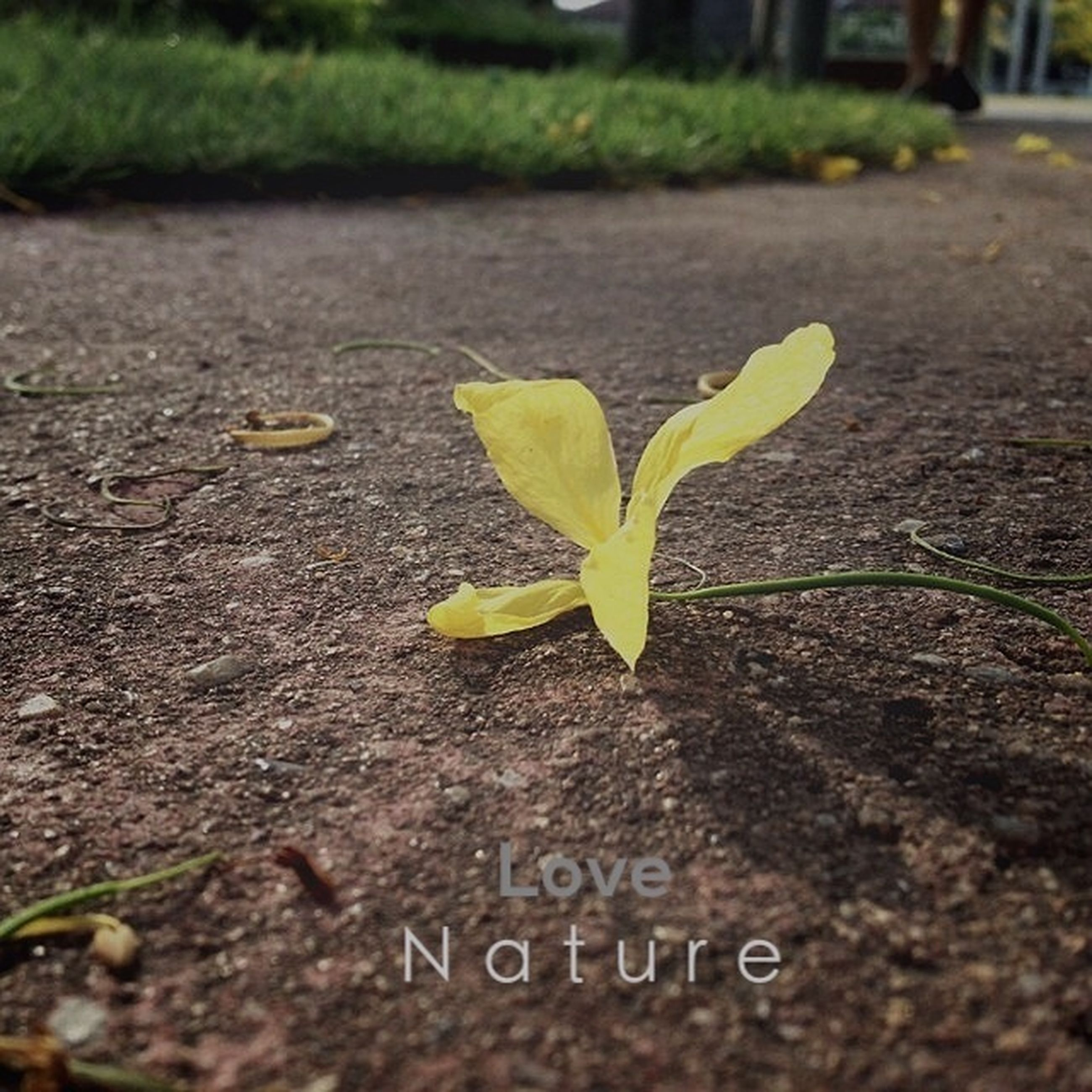 text, leaf, western script, communication, close-up, selective focus, focus on foreground, plant, growth, green color, day, outdoors, nature, street, no people, road, asphalt, field, yellow, ground