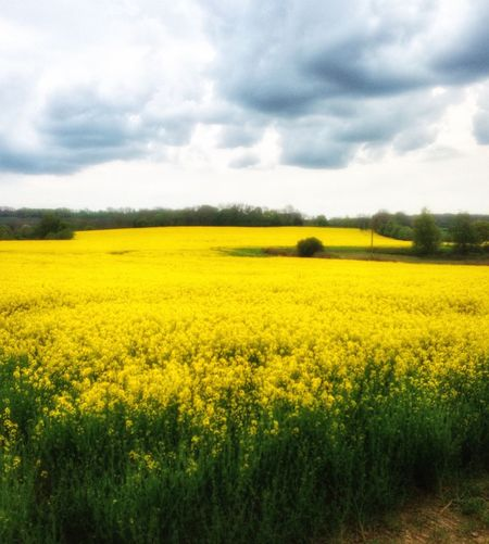 Countryside England Englishcountryside Landscape Fields Crops Scenery Scenic