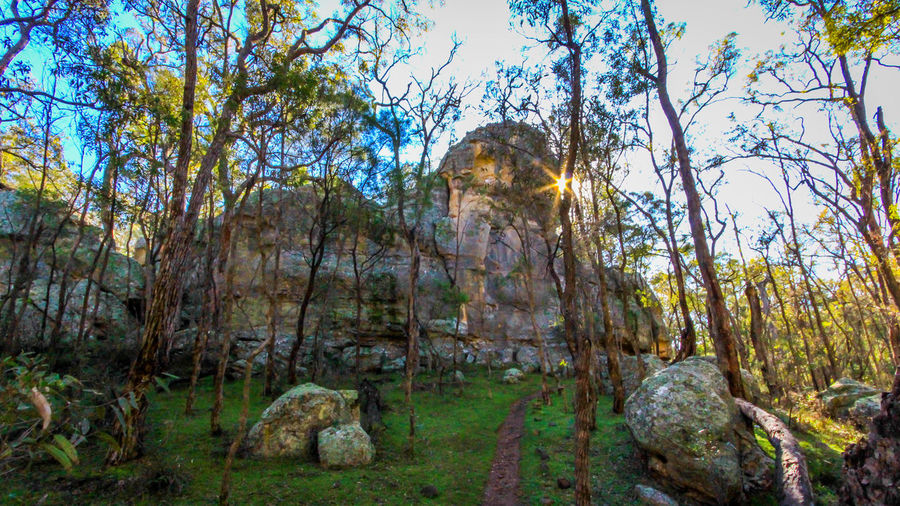 The Drip, Mudgee Australia EyeEm Best Shots Rock Formation Sunlight The Great Outdoors - 2017 EyeEm Awards The Week On EyeEm Beauty In Nature Day Forest Landscape Nature No People Outdoors Scenics Sky Spirituality Sunlight The Drip Tranquil Scene Tranquility Travel Destinations Tree