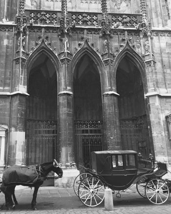 Horse Horses Carriage Horse Life Horsedrawn Bnw b&w street photography B&w Blackandwhite Black And White Black & White Black And White Photography Vienna Horse And Carriage Historic Archway Cathedral Arch