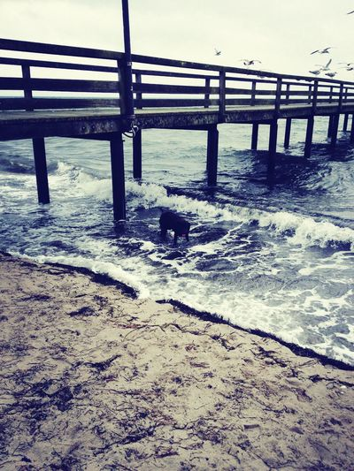 Seagulls Waves Winter I Love My Dog :3 :) was a beautiful day :))