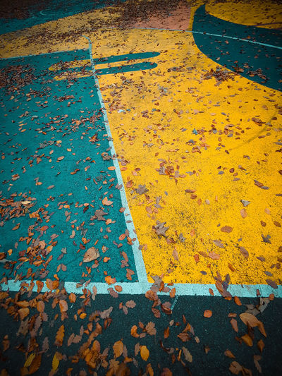 High angle view of yellow maple leaves on road