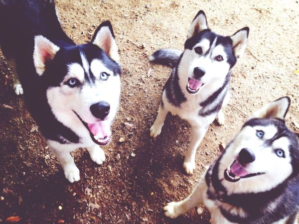 Dogs area:) EyeEm Best Shots Dogs Dog Hello World