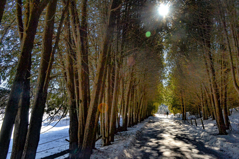 Shadows & Lights Winter Beauty In Nature Cedar Tree Cold Temperature Day Forest Growth Nature No People Outdoors Scenics Sky Snow The Way Forward Tranquil Scene Tranquility Tree Tree Tunnel Winter