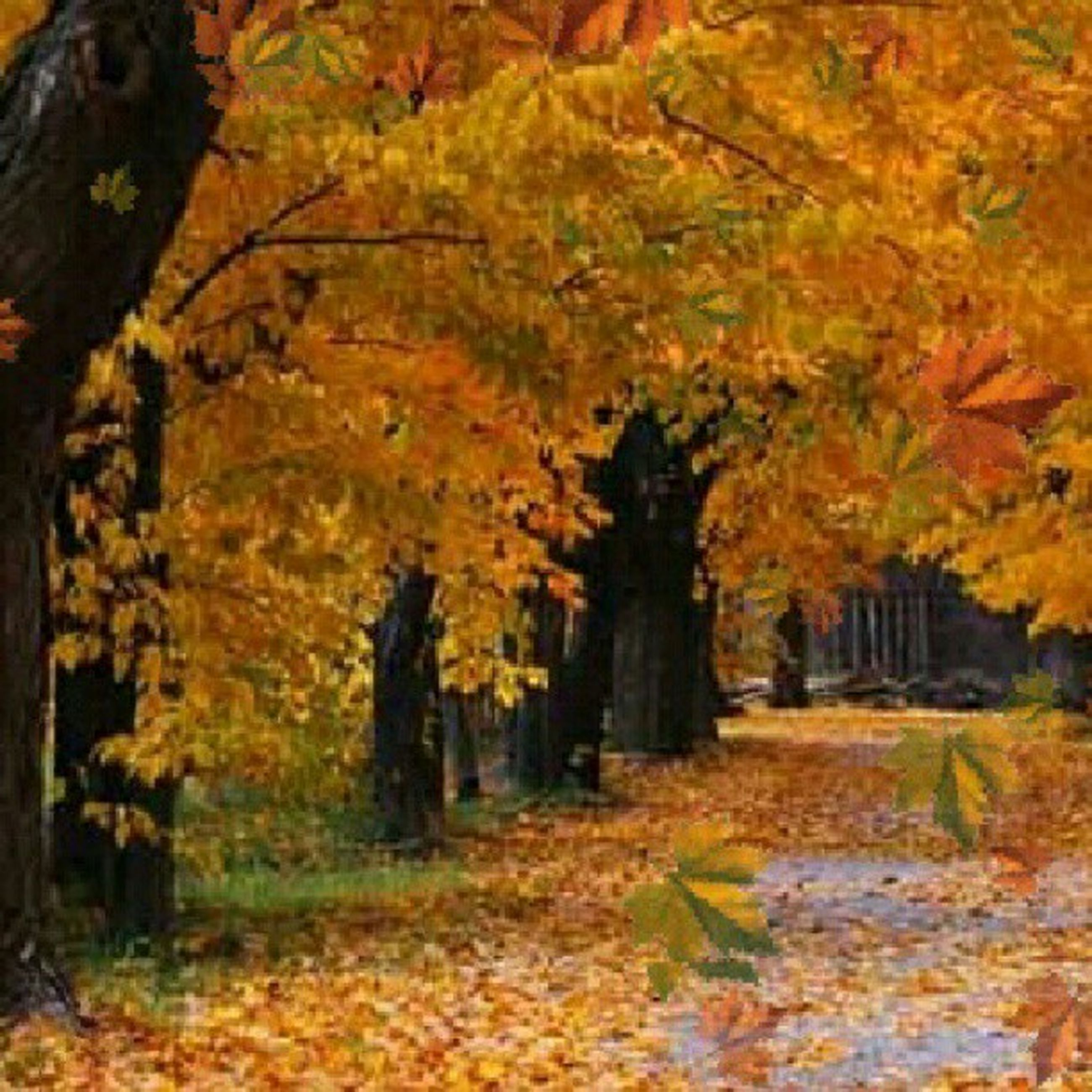 autumn, change, tree, season, leaf, tranquility, nature, orange color, beauty in nature, growth, tree trunk, tranquil scene, forest, fallen, scenics, leaves, yellow, branch, day, outdoors