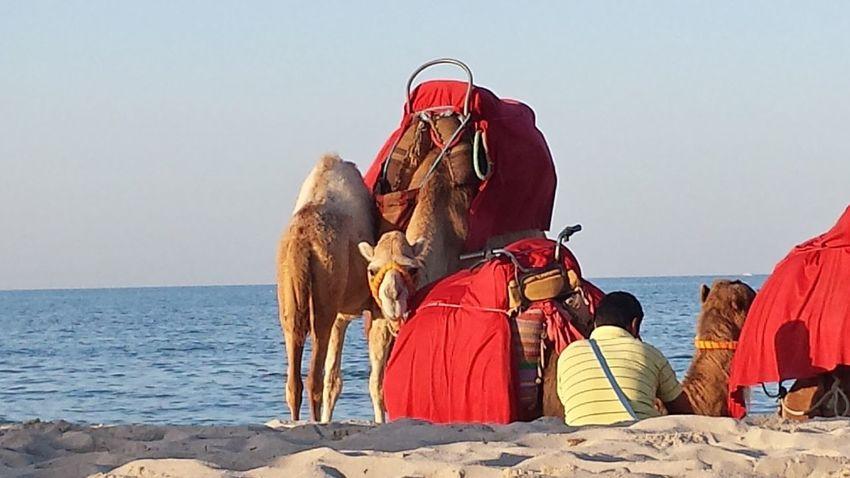 Djerba, Tunisia Pause Urlaub ❤ Tiere♡