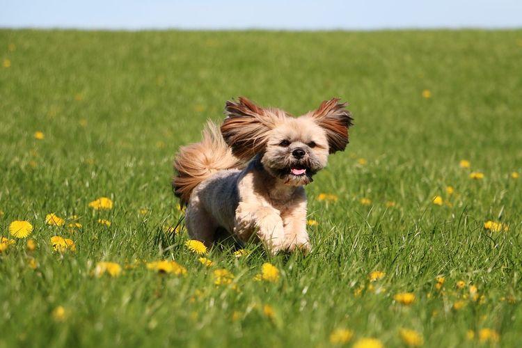 Dog Running On Grassy Field Against Sky