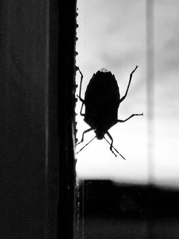 Black & White Invertebrate Insect Animal Themes Animal Animals In The Wild Animal Wildlife One Animal Glass - Material Silhouette