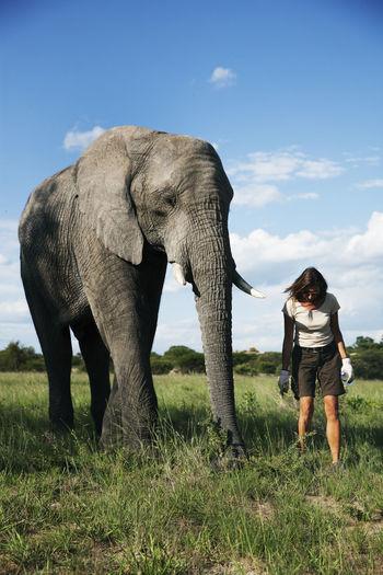 Full length of elephant standing on field against sky
