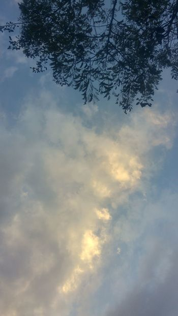 Close-up Clouds And Sky Soft Light Tree Leaves Silhouette Light Light In Clouds Sunlight Fluffy Clouds Blue Looking Up