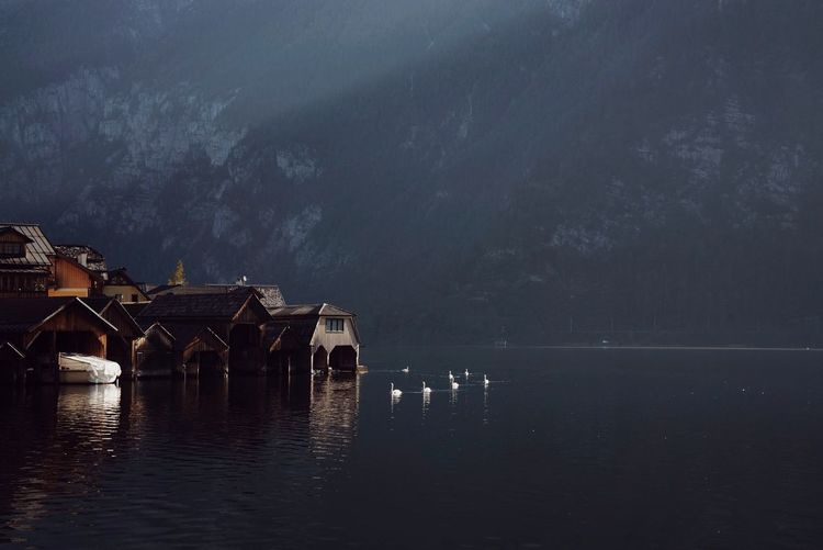 White swans on lake against dark mountain in austria