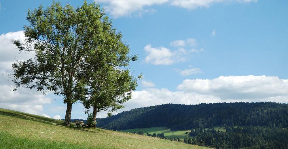 Arbre Beauty In Nature Blue Chateau De Joux Cloud Cloud - Sky Cloudy Grass Idyllic Igersdoubs Landscape Montagne Mountain Nature Non-urban Scene Outdoors Paysage Pontarlier Scenics Sky Tranquil Scene Tranquility Tree