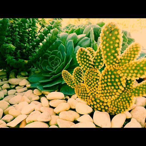Momgarden Cactaceae Cactos Kaktos Cactus 😚 Cacti Xperiaindepth