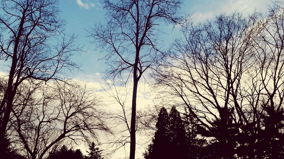 Low Angle View Tree Sky Silhouette Day Nature Branch