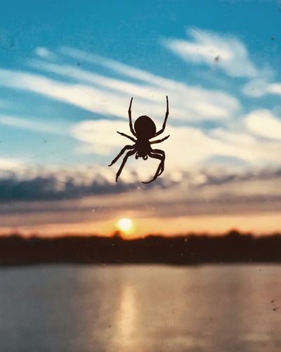 Close-up of spider in the sunset