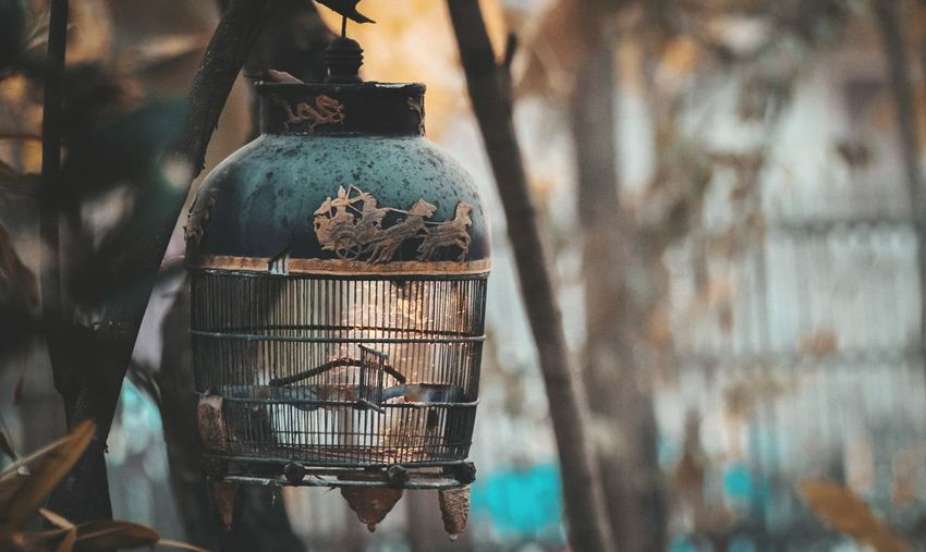 bird cage old Bottle Close-up Cage Birdcage Captive Animals Animals In Captivity For Sale My Best Travel Photo