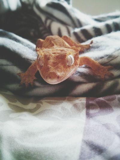 That lizard life. Lizard Pets