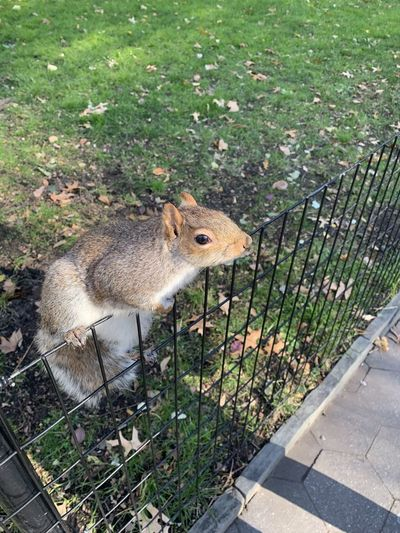 High angle view of squirrel on fence