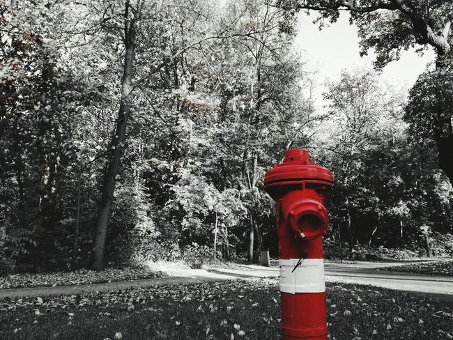 Red Tree Outdoors Fire Hydrant Day Fall Focus On Foreground Grass No People Nature