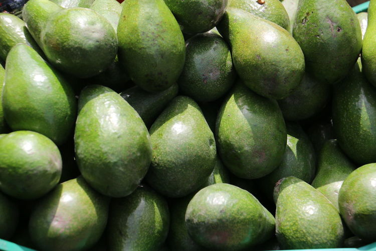 Green Natural Light Nature Close Up Guacamole Healthy Eating Paltas Sunny Day☀