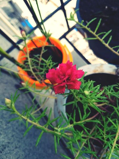balcony gardening Flower Head Flower Leaf High Angle View Close-up Plant Green Color