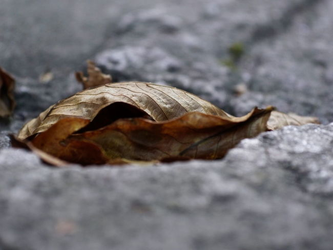 Autumn Autumn colors Autumn Autumn Leaves Pattern, Texture, Shape And Form Textured  Brown Close-up Concrete Day Dry Falling Fragility Germany Leaf Leaves Nature Naturelovers No People Outdoors Pattern Plant Part Selective Focus Solid Surface Level Textured