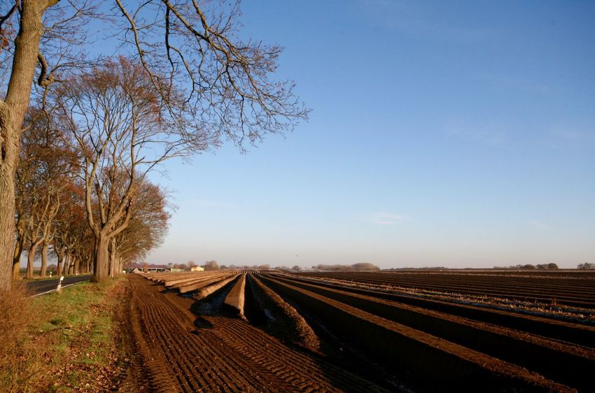 Agriculture Bare Tree Beauty In Nature Clear Sky Day Landscape Nature No People Outdoors Railroad Track Rural Scene Sky Tree Brandenburg Spargelfeld Kremmen Kremmen In Brandenburg