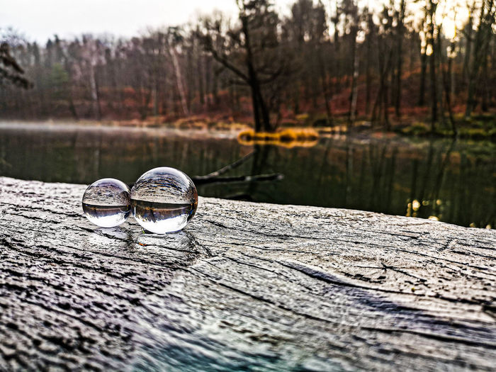 Close-up of water on table by lake in forest