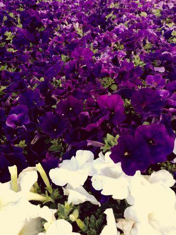Blooming Petal Flower Head Plant Life