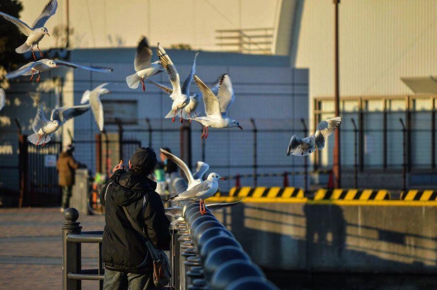 Nikon D3200 Photography Sea Japan Seagulls Birds Yokohama Minatomirai Akarenga Redbrick