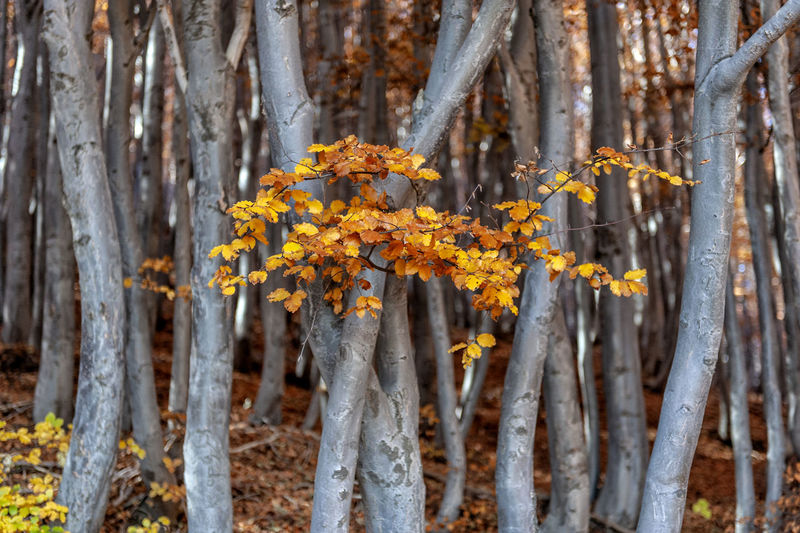 Close-up of tree trunk in forest during autumn