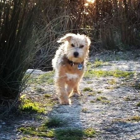 Nico Dogs_of_instagram Doglover Dog Dogsofinstagram Run Running Mypet Mydog Dogoftheday Pies Piesek Mojpies Animallovers Animalsofinstagram Animal Animals Inspiration Instalike Instagood Instadaily Instamood