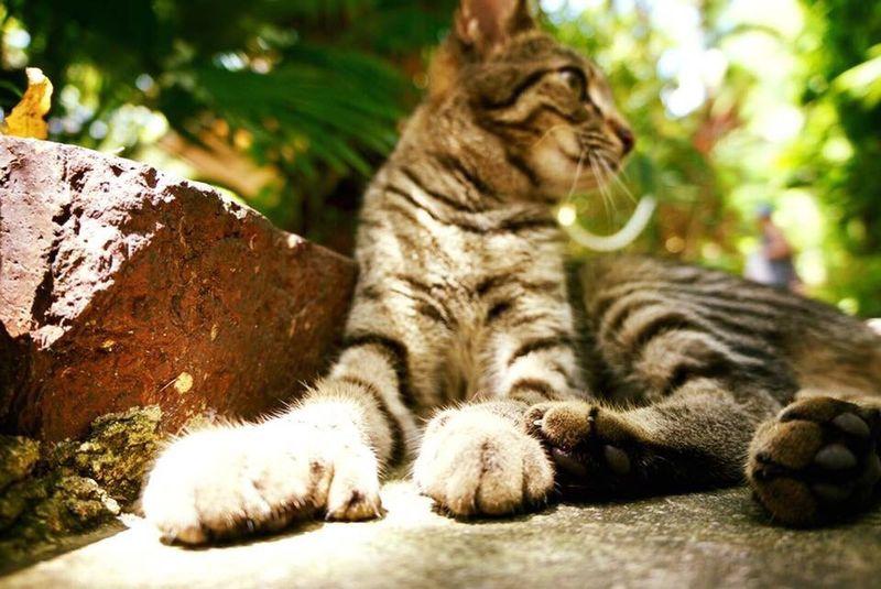 Hemingway Cats Key West Close-up Animals