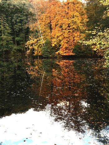 Tree Nature Reflection Water No People Outdoors Forest Lake Germany Hamburg Autumn Autumn Colors