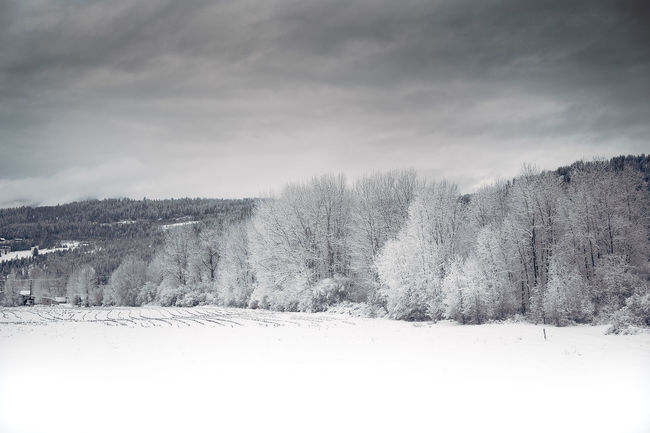 Bare Tree Cold Cold Temperature Frozen Grey Grey Sky Landscape Outdoors S Season  Snow Snowy Snowy Tree Snowy Trees Tranquil Scene Tree Weather White Winter Winter Winter Trees Winter Wonderland Wintertime