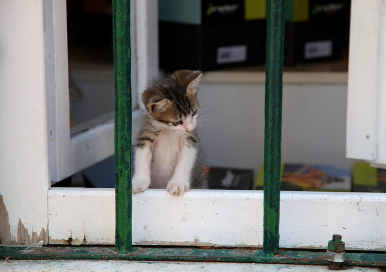 Locked up in Kotor Animal Themes Baby Kitty Behind Bars Cat Close-up Curiosity Curious Cat Day Domestic Animals Domestic Cat Feline Having Fun In Jail Indoors  Jail Jailtime Mammal No People One Animal Pets Sentence