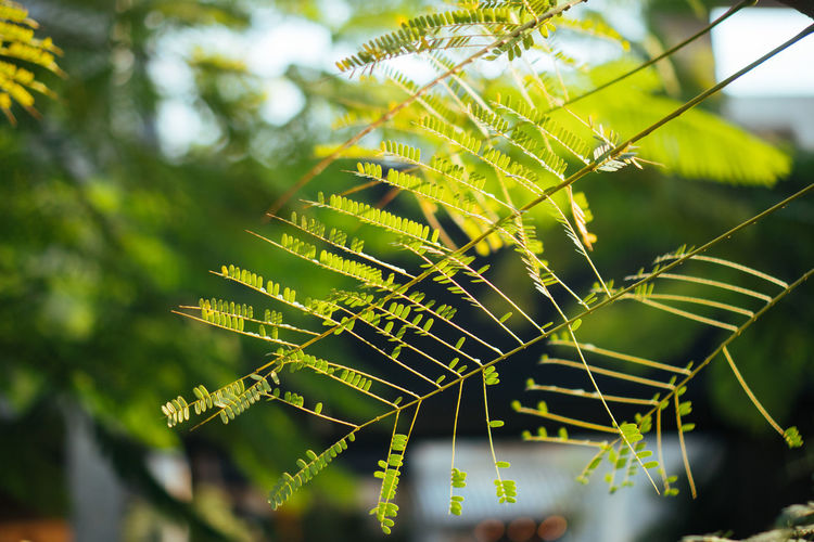 Plant Focus On Foreground Close-up Green Color Spider Web Nature Leaf Growth Beauty In Nature Fragility Day Plant Part No People Tree Vulnerability  Outdoors Selective Focus Natural Pattern Freshness Tranquility Complexity Leaves