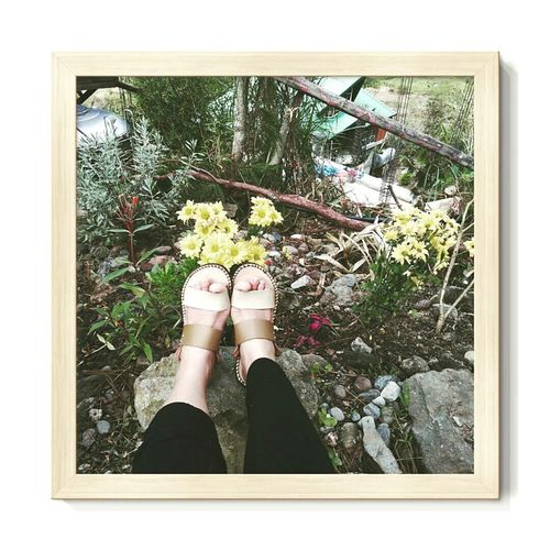 Color Of Life Yellow Flowers Feet On The Ground Rocky Mountains Sagada, Philippines Gaia Cafe Sagada Adventure Sagada Sagadaexperience Sagadalove