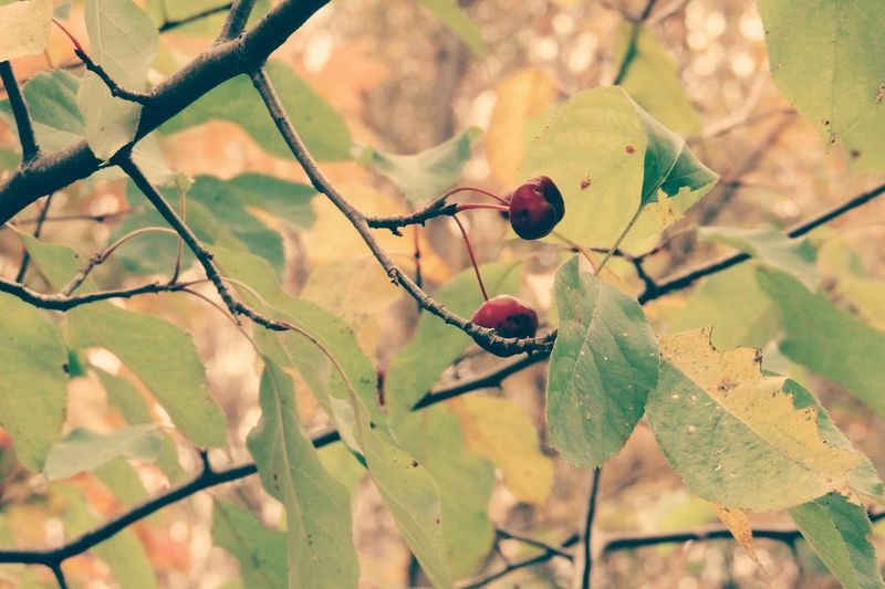 the tree in my garden Autumn Vintage Nature
