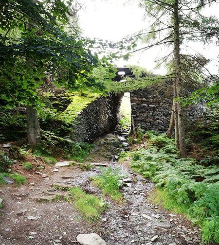 Tree Scene Trees Wales Wales UK Tomb Raider