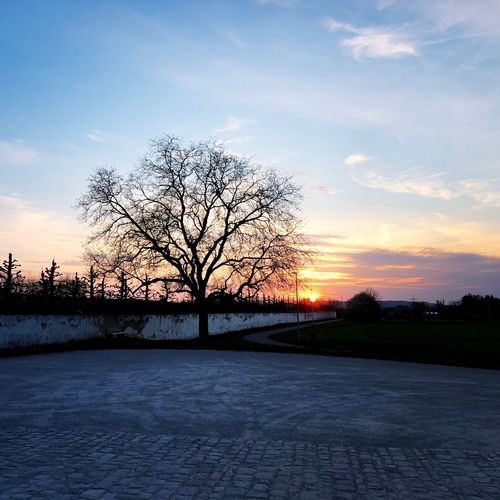 Schloss Seehof Tree Sky Sunset Plant Cloud - Sky Beauty In Nature Silhouette Nature Scenics - Nature Tranquil Scene Tranquility No People Bare Tree Growth Branch Field Outdoors Land Landscape Non-urban Scene