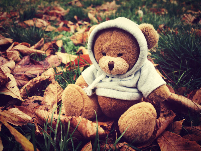 Teddy in nature Alone Autumn Baby Bear Fashion Nature Plush Soft Teddy Animal Themes Childhood Close-up Clothing Cute Day Fall Hoodie Leaves Nature No People Season  Stuffed Toy Sweatshirt Teddy Bear Toy