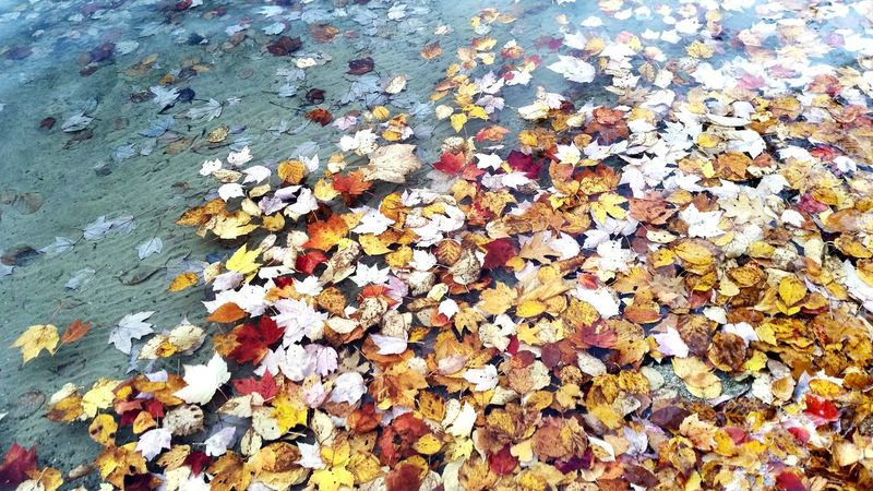 High Angle View Autumn Multi Colored Backgrounds Change No People Full Frame Day Close-up Outdoors Nature Season  Nature Foliage Natural Pattern Water Leaves In Water Leaves Perspectives On Nature