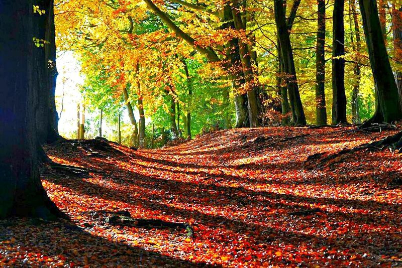 Forest Autumn Autumn Colors Hugging A Tree Light And Shadow Sunlight ☀ Alone Time Landscape_photography
